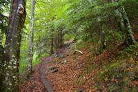 Le chemin dans le Bois de Fontanal