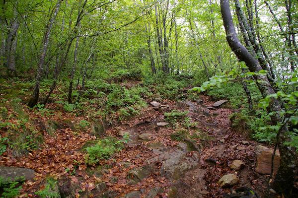 Le chemin dans le Bois de Fontanal, au dessus de Ségalasse