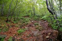 Le chemin dans le Bois de Fontanal, au dessus de Segalasse
