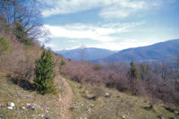 Le sentier au dessus du Bosc