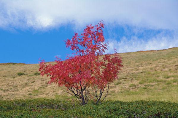 Paysage d_automne sous le Picou de Mounégou