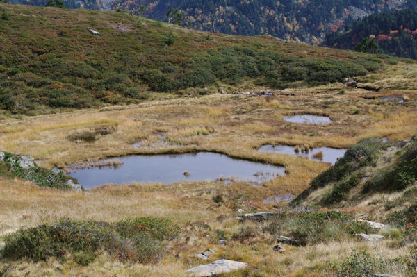 Laquets en remontant au Col de la Coumeille de l_Ours