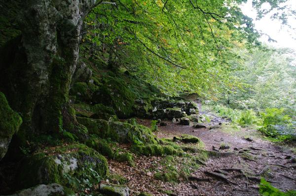 Les ruines d_un abri rive gauche du Ribérot