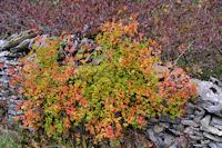 Couleurs d'automne vers Les Moulieres