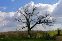 Un bel arbre a vecu vers Le Gajon