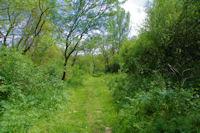 Le chemin au bord de la Gimone