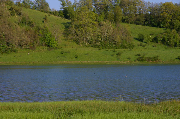 Des hirondelles venant se désaltérer sur le lac