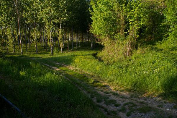 Le début du chemin, juste avant le pont enjambant la Gimone