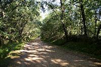Le chemin arbore en descendant vers Maitre Arnaud