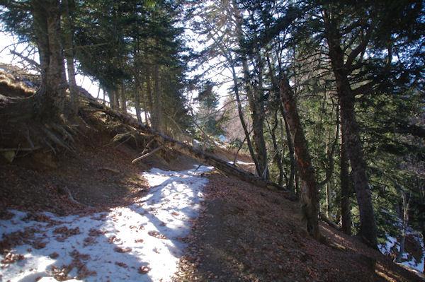 L_ancien chemin à la Serre de la Pleyte dans le Bois de Souverdède