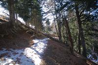 L'ancien chemin a la Serre de la Pleyte dans le Bois de Souverdede