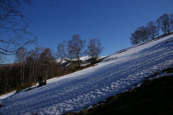 Les pentes enneigées au dessus d_Artigue, on distingue derrière les arbres le Pic de Burat