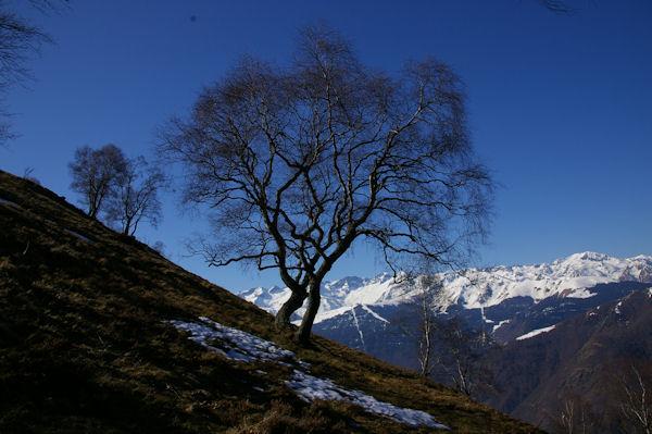 Les pentes enneigées au dessus d_Artigue, au fond, les sommets du Luchonnais
