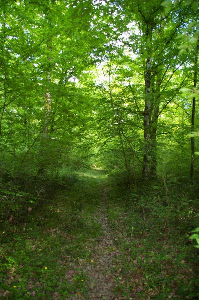 Le chemin boisé conduiqnt à Plagné de l&#39Auselet