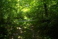 Le chemin boise conduiqnt a Plagne de l&#39Auselet