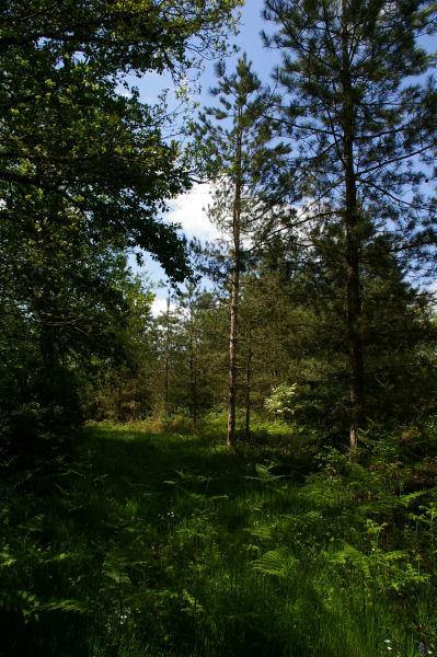 Le bois de Buzet