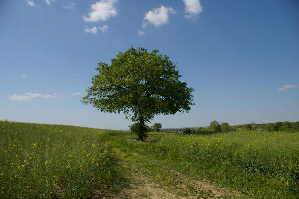 Un arbre comme je les aime vers Monplaisir