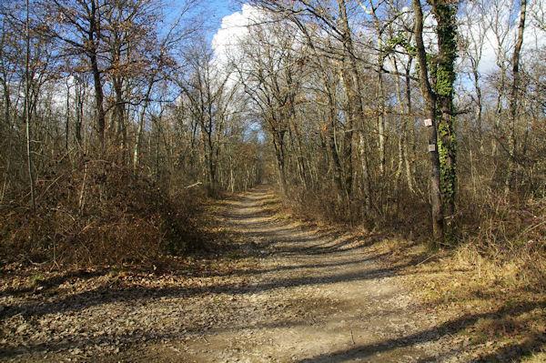 Chemin d&#39hiver en forêt de Bouconne