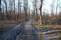 Chemin d'hiver en foret de Bouconne