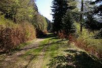 Le chemin forestier menant au Refuge de Larreix