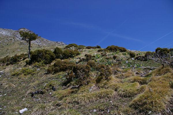 Parterre fleuri en montant au Col du Pas de l&#39Ane