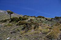 Parterre fleuri en montant au Col du Pas de l'Ane