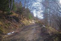 Dans le Bois d'Artigue