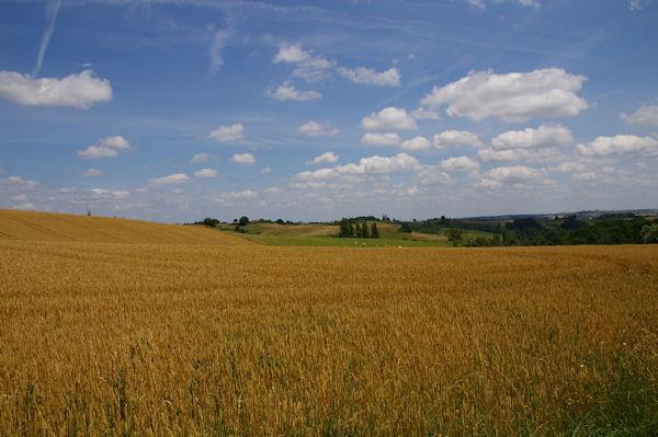 Les champs de blé dans le vallon du ruisseau de la Broquère sous La Carretère