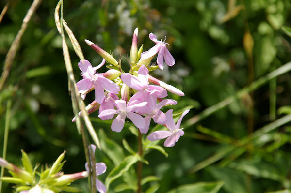 De jolies fleurs à Cantin