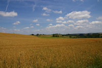 Les champs de ble dans le vallon du ruisseau de la Broquere sous La Carretere