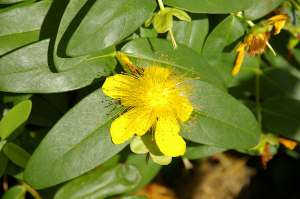 Belle fleur à Perron