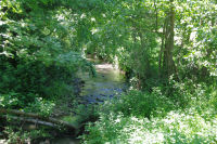Le ruisseau du Lavet de derriere