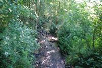 Le ruisseau du Lavet