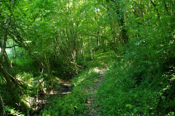 Le sentier dans les bois à La Coume