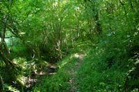 Le sentier dans les bois a La Coume