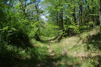 Le chemin arbore sous Les Oubats
