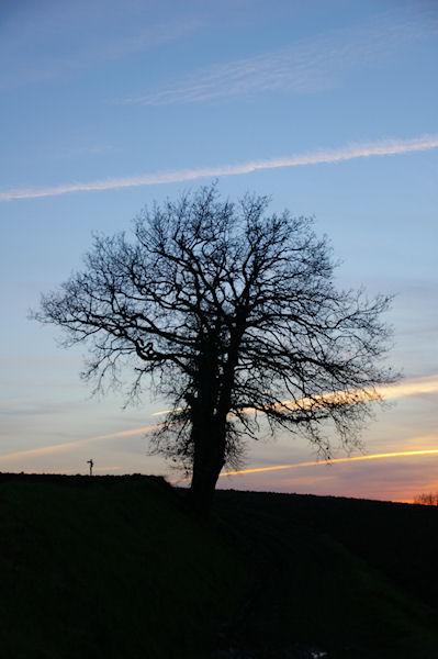 Un arbre solitaire vers le Tumulus