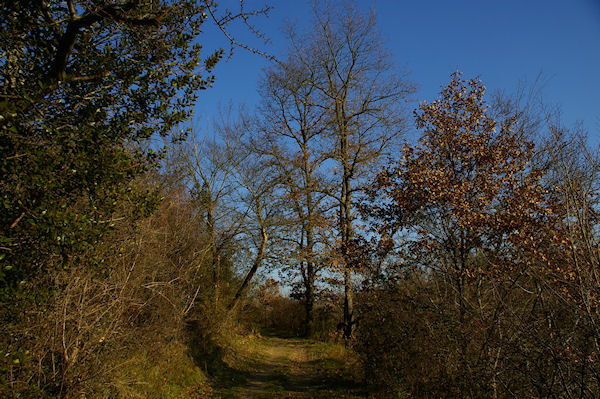 Le chemin au dessus de Rive d'Aigue