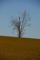 Un arbre solitaire vers Borde Haute