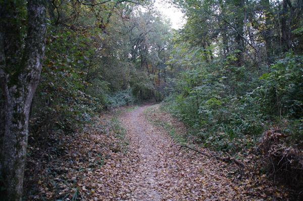 Le GR653 dans le Bois de Lamothe
