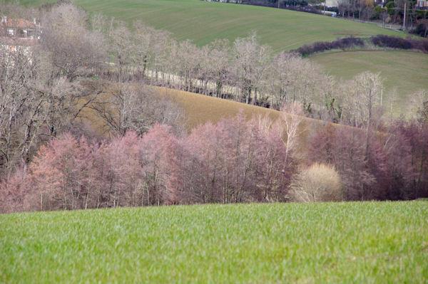 Lignes et couleurs depuis Gautis