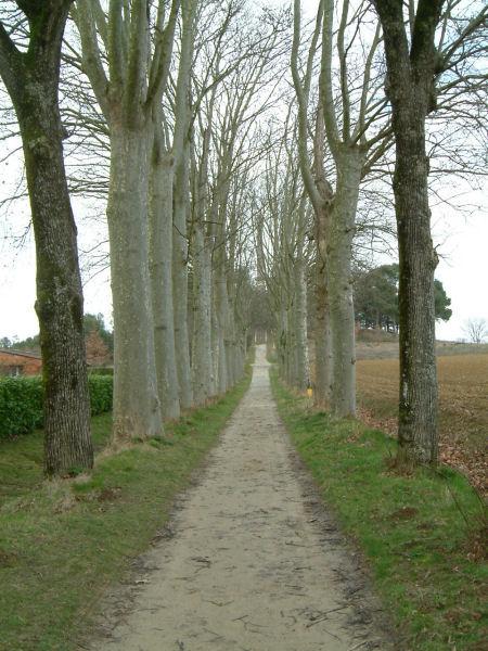 Le chemin menant à l'obélisque de Riquet