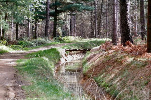 Le GR86 le long du canal de Franquevielle à Cardeilhac au mileiu des pins