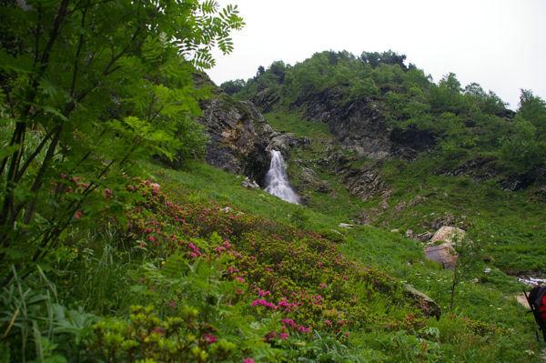 Un petit torent descendant de La Montagnette entouré de Rhododendrons