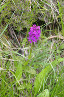 Une Orchidee, mais laquelle?