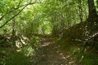 Le GR86 dans le Bois de Morthe
