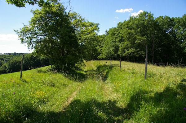 Le GR86 entre La Carretère et le Bois de Morthé