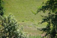 2 chevrueils dans la prairie