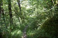 Le chemin arbore dans le vallon du ruisseau de Vermas