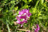 C'est peut etre pas une orchidee, mais c'est beau
